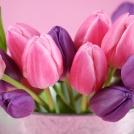 Boldog nőnapot kívánunk minden hölgyolvasónknak!
